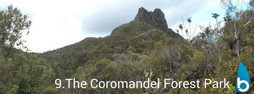 coromandelforestparkpinnacles