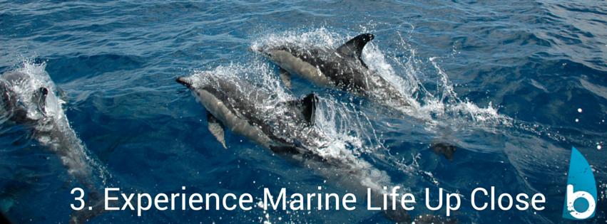 dolphinswhitianga