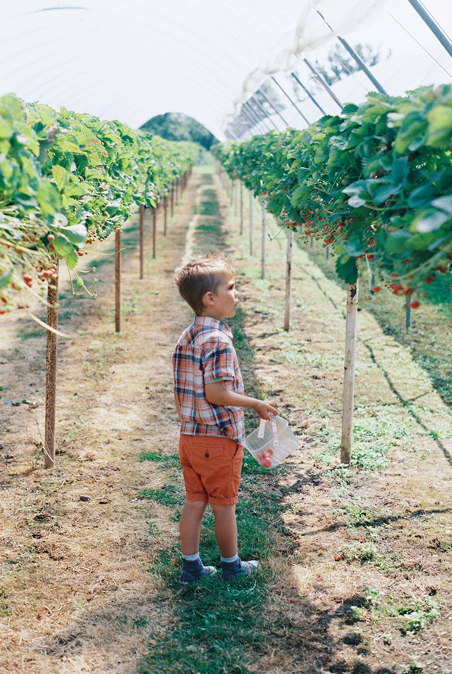 Clive's Fruit Farm Strawberry Picking