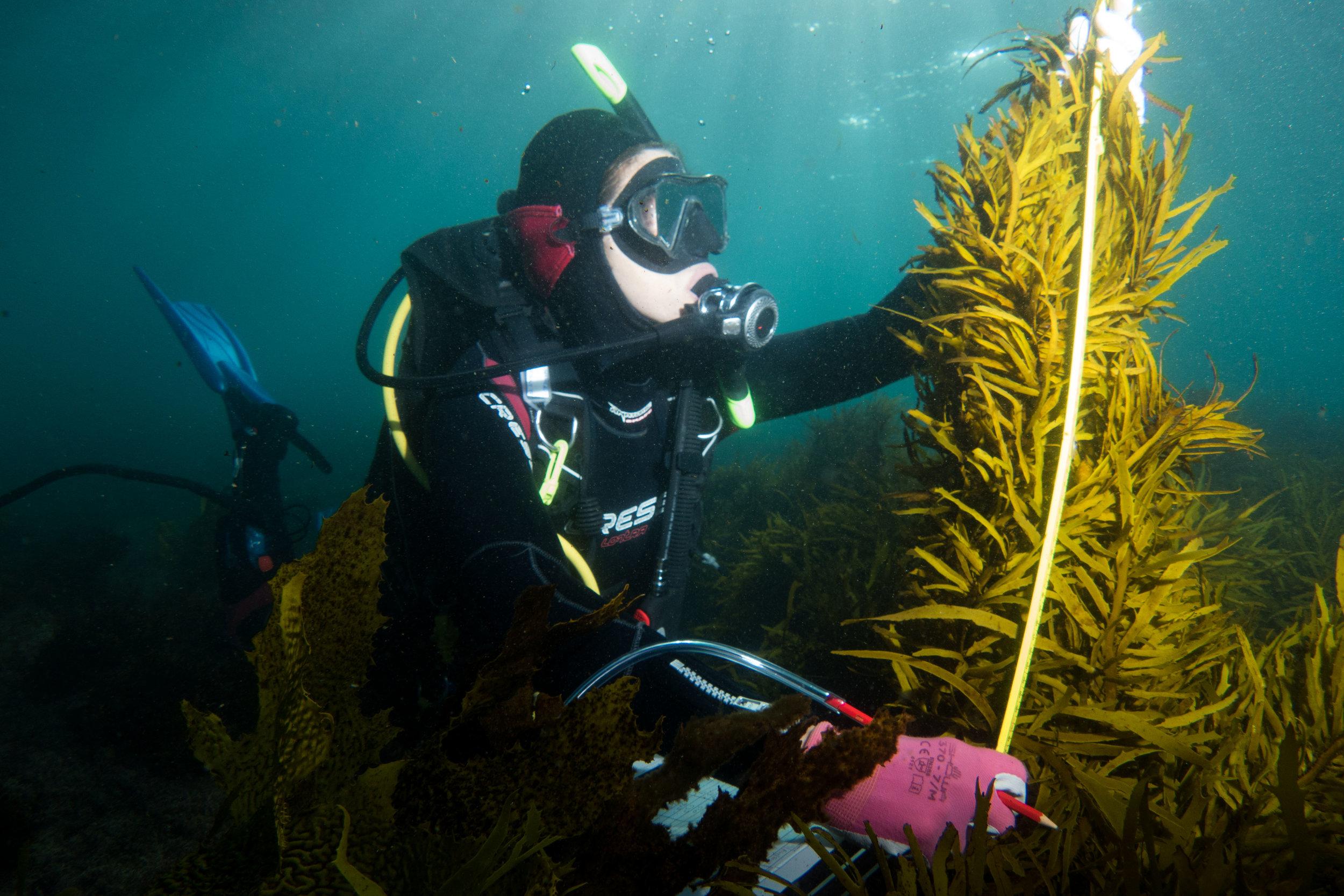 underwater tree.jpg