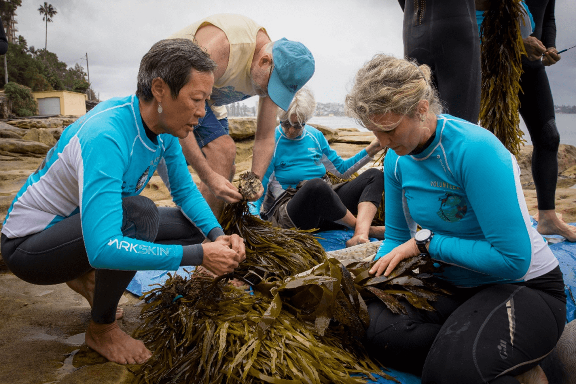 Volunteers from Friends of Cabbage Tree Bay assist with the sorting and measuring of crayweed before it is transplanted