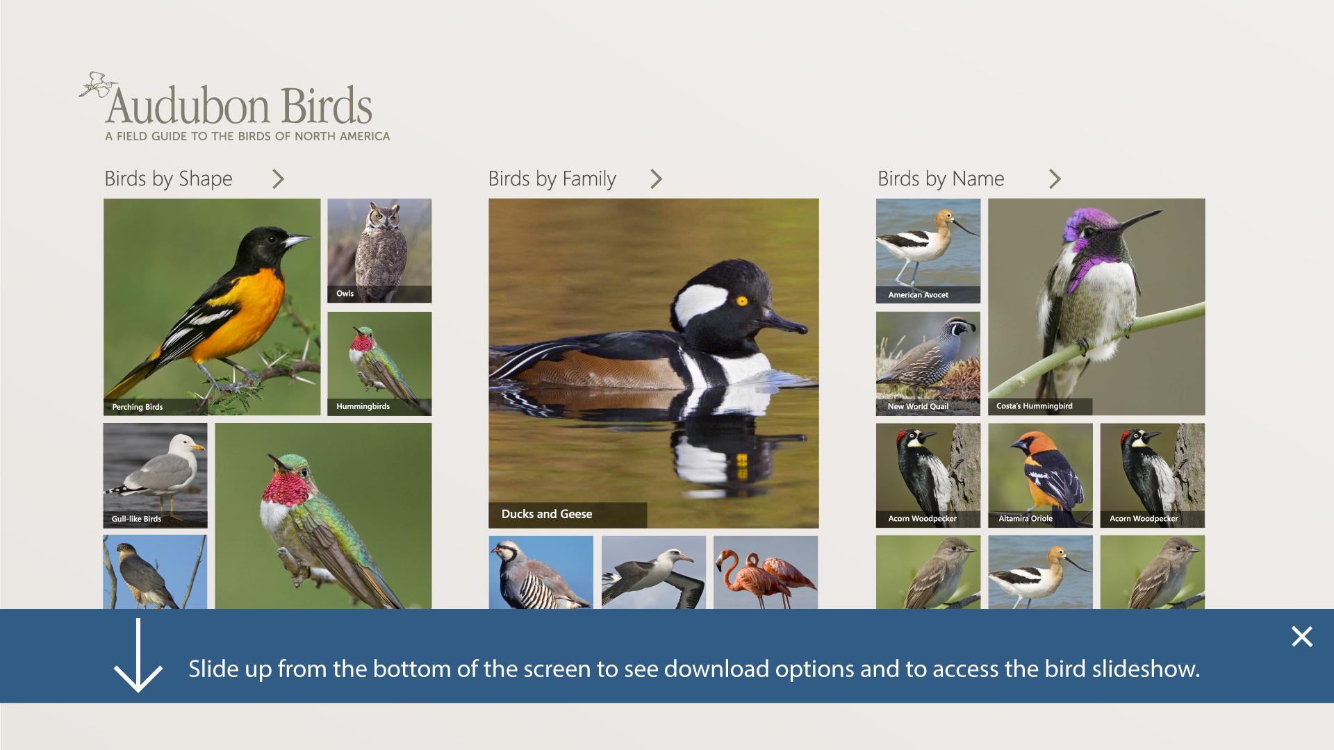 Audubon Birds Design for Windows 8