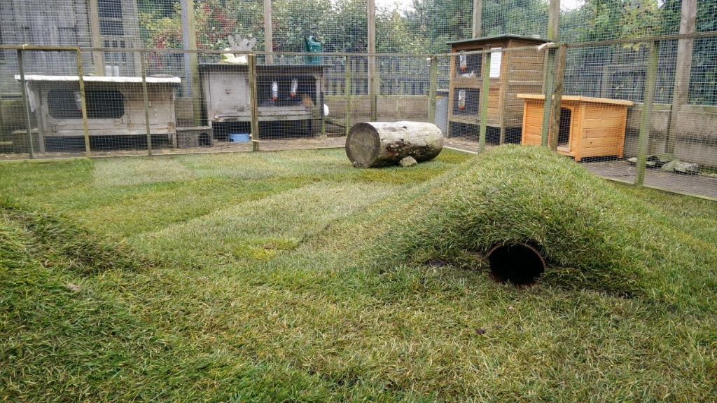 Rabbit play area