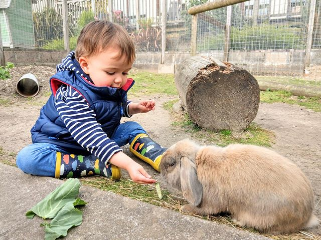 We're offering a 20% reduction on our remaining weeks in June. Come and meet all of our animals including our latest addition Dusty the rabbit (pictured). https://www.knowle-farm.co.uk #knowlefarm #devon #selfcatering #southdevon #holidaycottages #childfriendly #babyfriendly #toddlerfriendly #familyfriendly #cottages #familyholiday #farm #holiday #deal #offer #sale