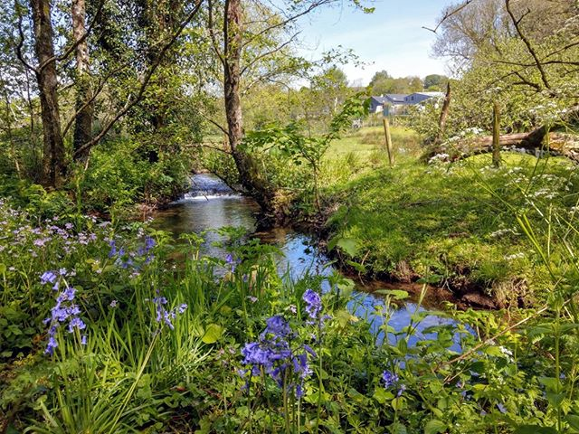 Our woodland walk is particularly pretty at this time of year https://www.knowle-farm.co.uk #knowlefarm #devon #selfcatering #southdevon #holidaycottages #childfriendly #babyfriendly #toddlerfriendly #familyfriendly #cottages #familyholiday #farm #holiday #woodland #springtime #nature #walks