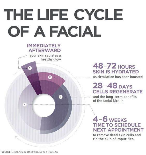 Life cycle of a facial.jpg