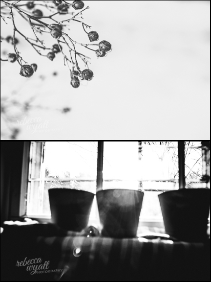 Flower Pots and branches