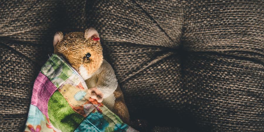 Cozy Hamster