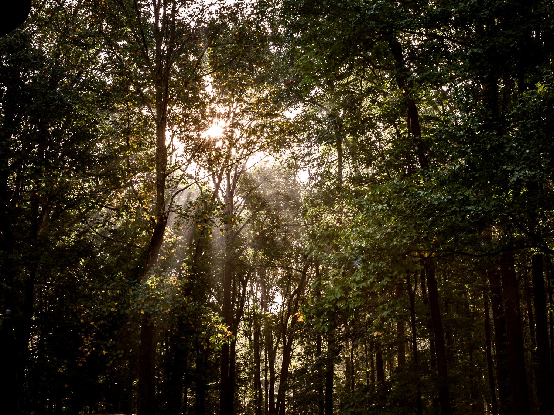 rebecca_wyatt_light_in_trees-1.jpg