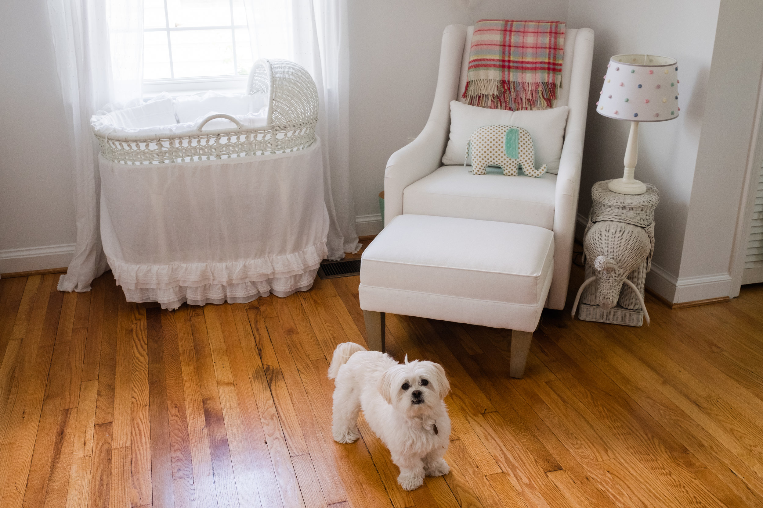 Nursery view chair by window with adorable family puppy dog