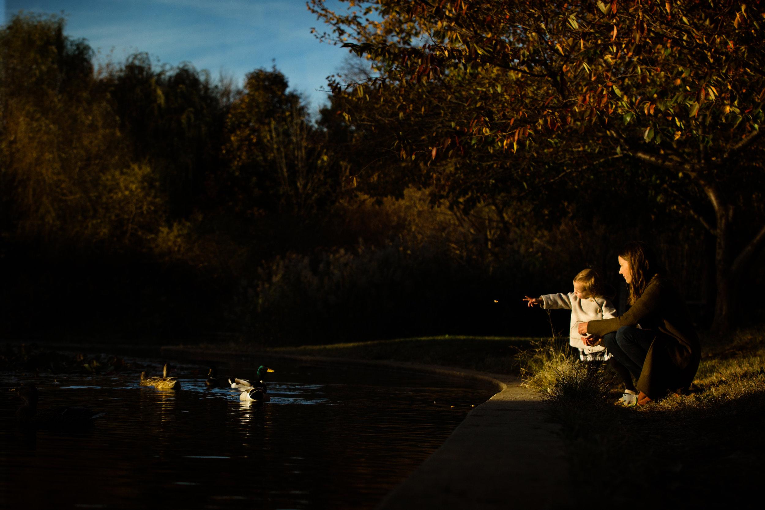 little girl feeds the ducks in Patterson Park golden hour portrait