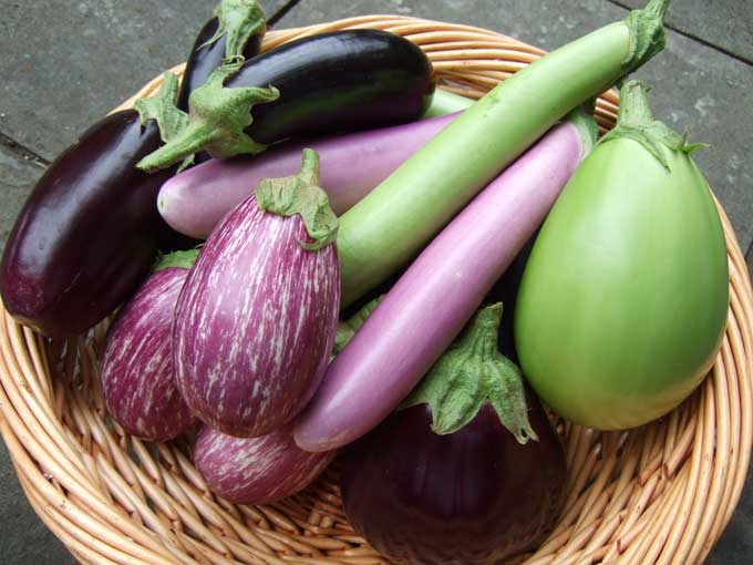 eggplant-harvest.jpg