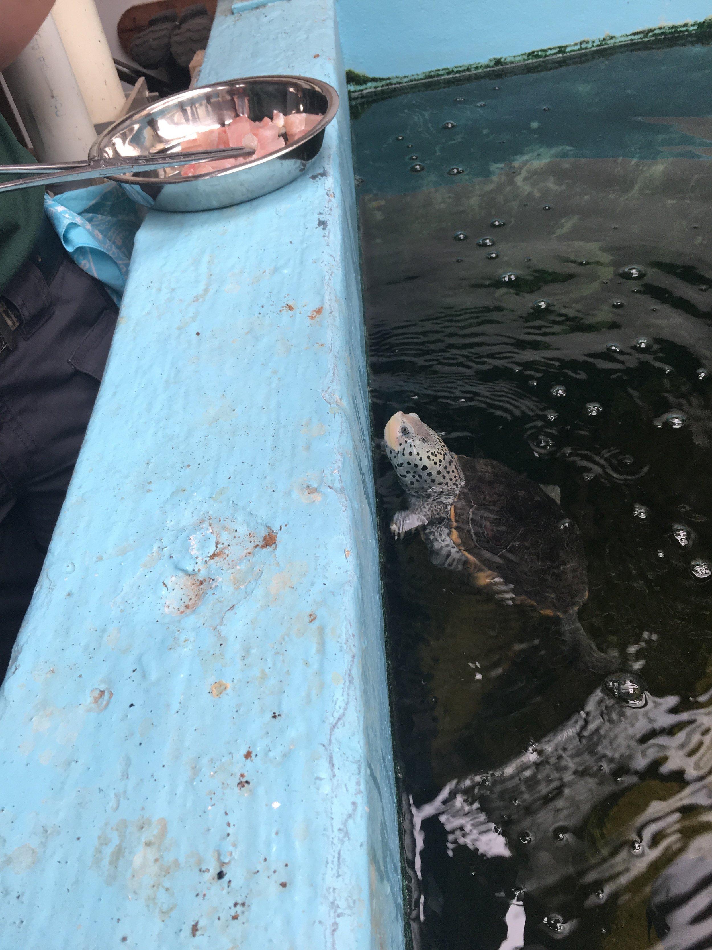 zoo feeding fish.jpg