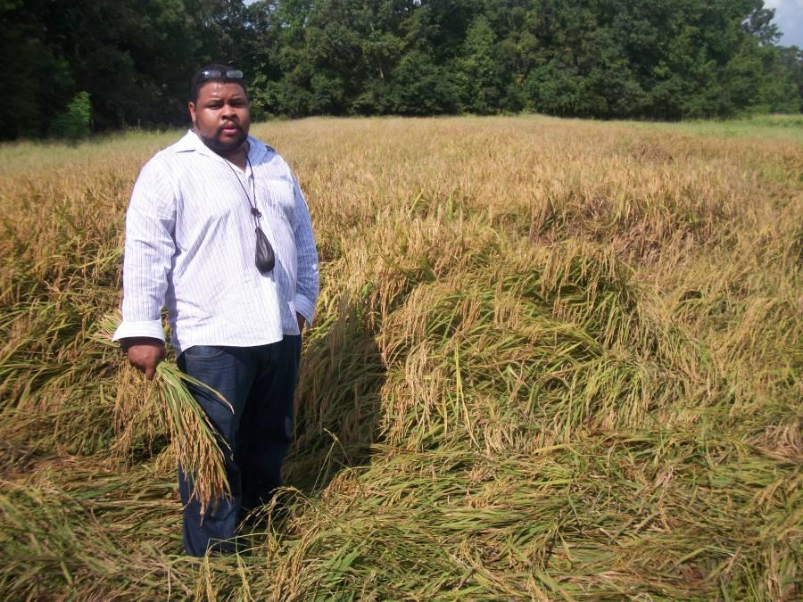 Culinary historian Michael Twitty harvests rice in South Carolina. Twitty talks about exploring his ancestry on The Southern Discomfort Tour.   CREDIT MICHAEL TWITTY