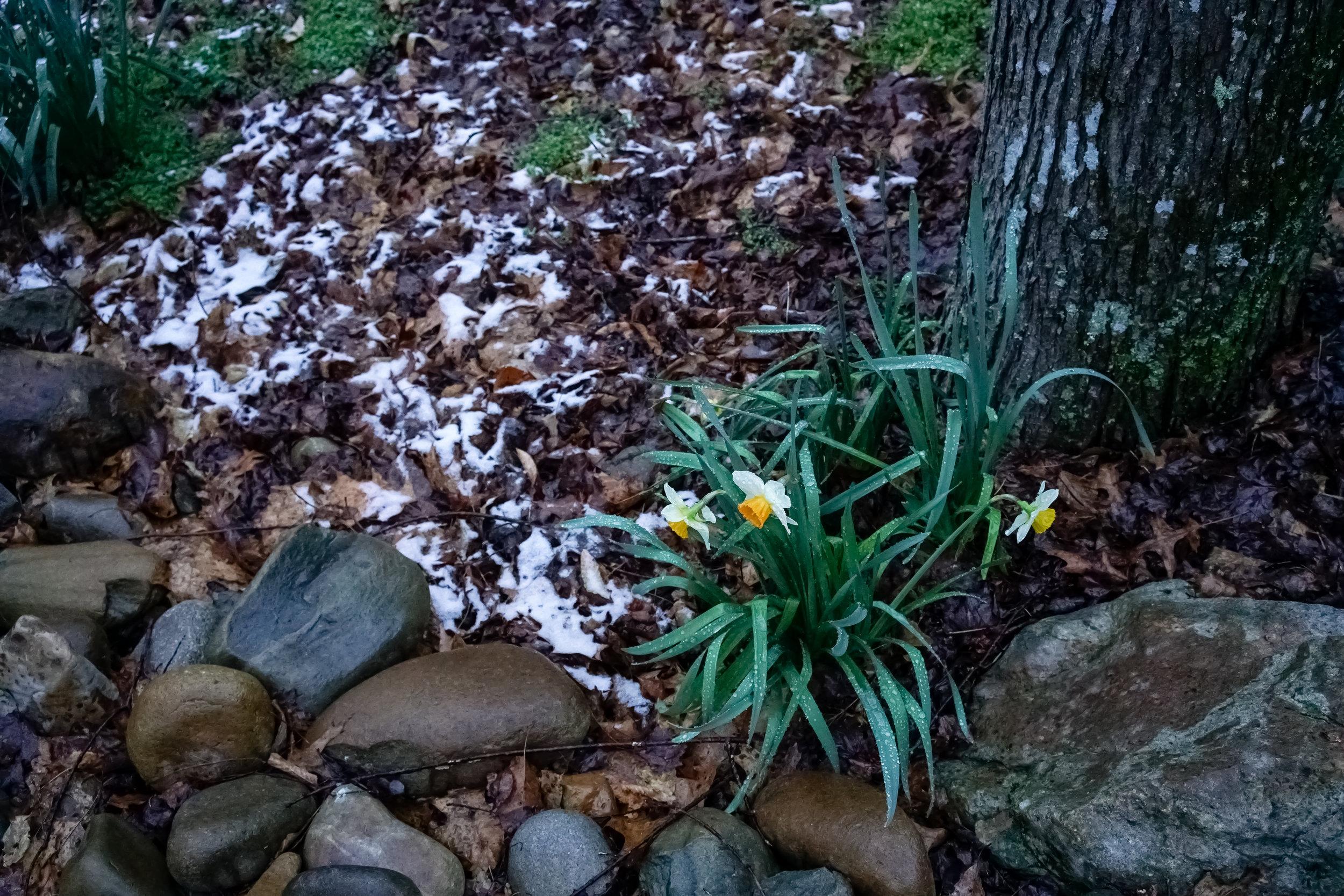 Snow-03794.jpg