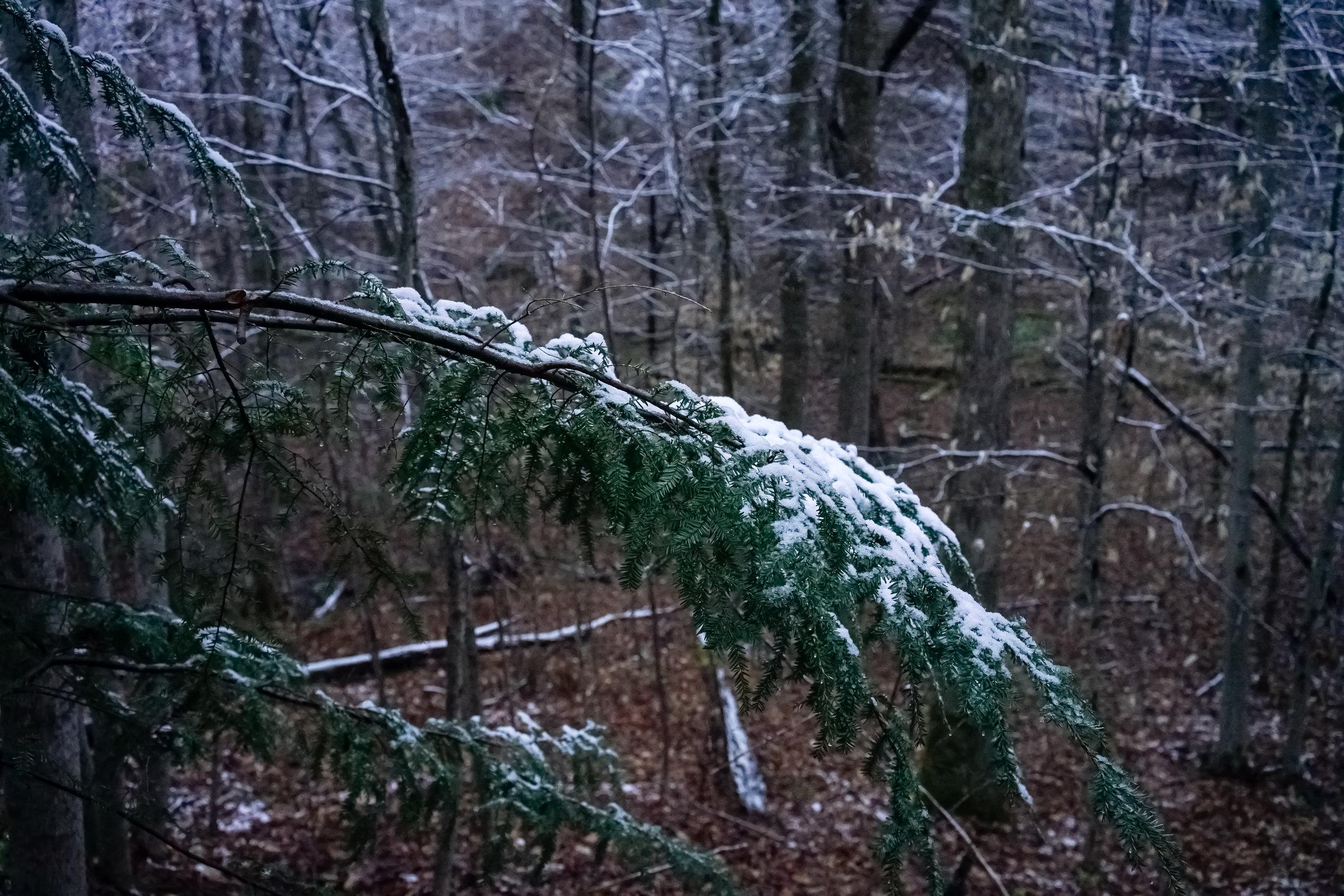 Snow-03797.jpg