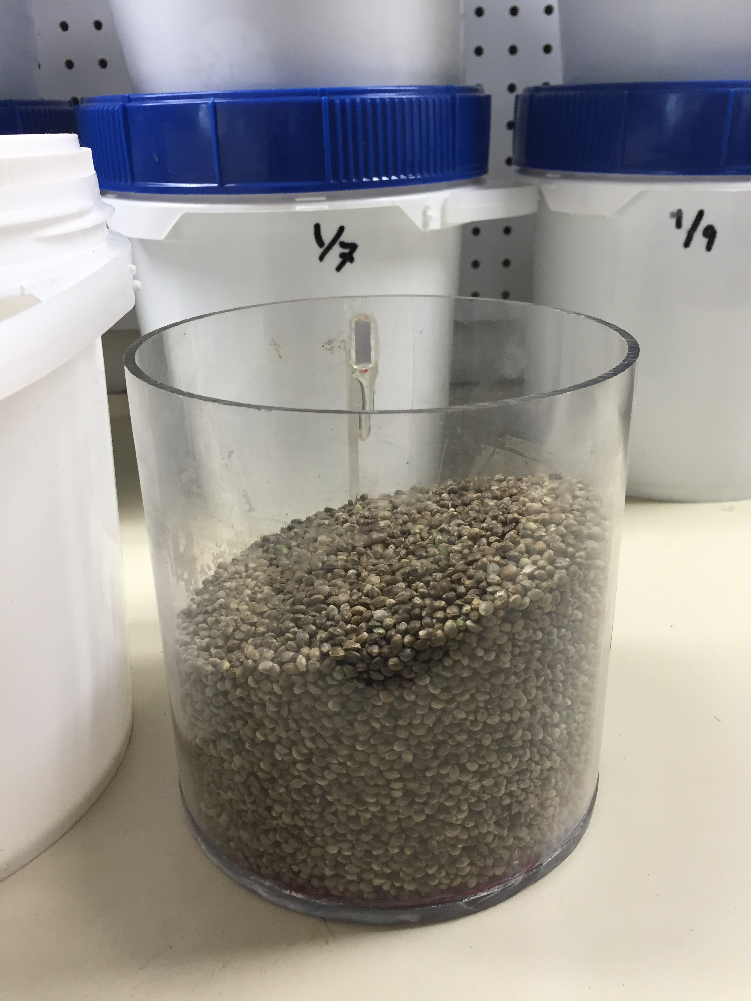 Clean seed, ready for packaging!