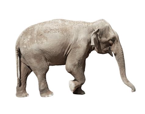 elephant1.png