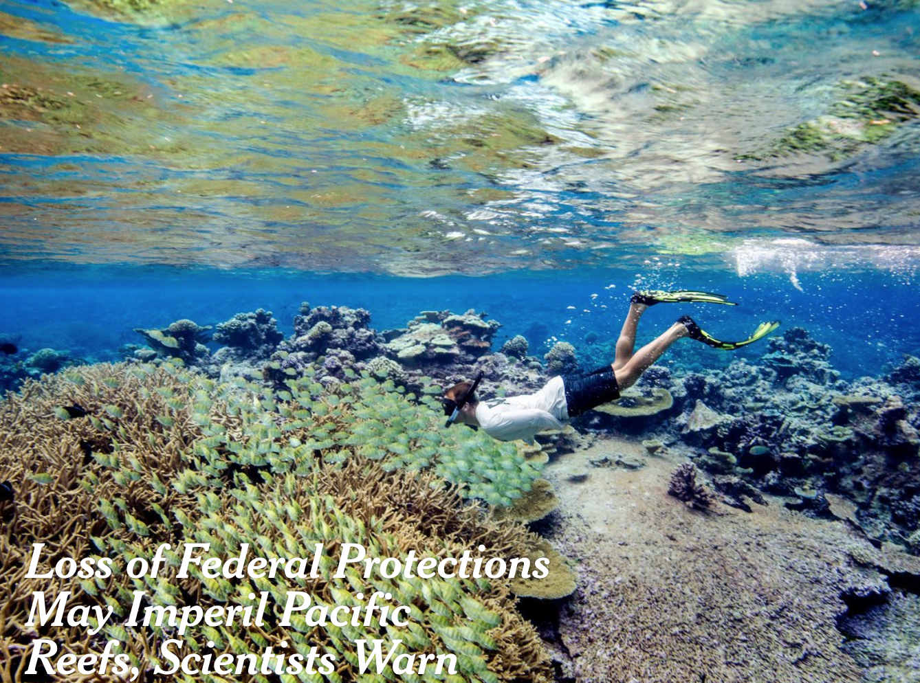 loss of federal protection for pacific reefs.png