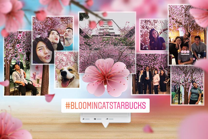 Starbucks_CherryBlossoms_MediaKV_1.jpg