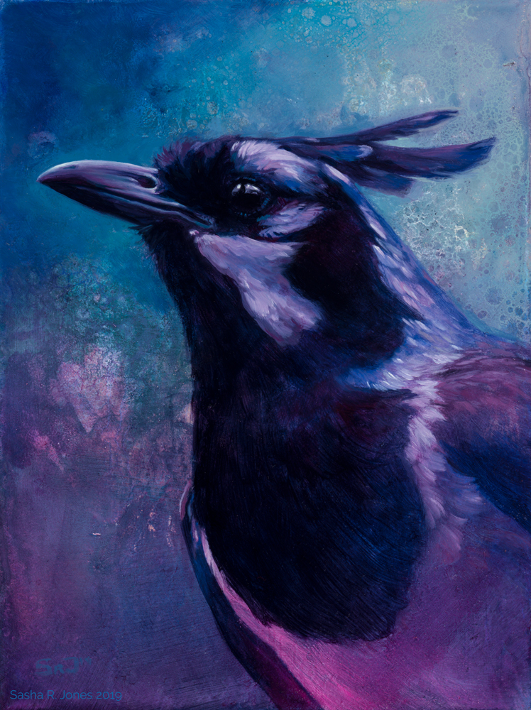 Magpie-Jay.jpg