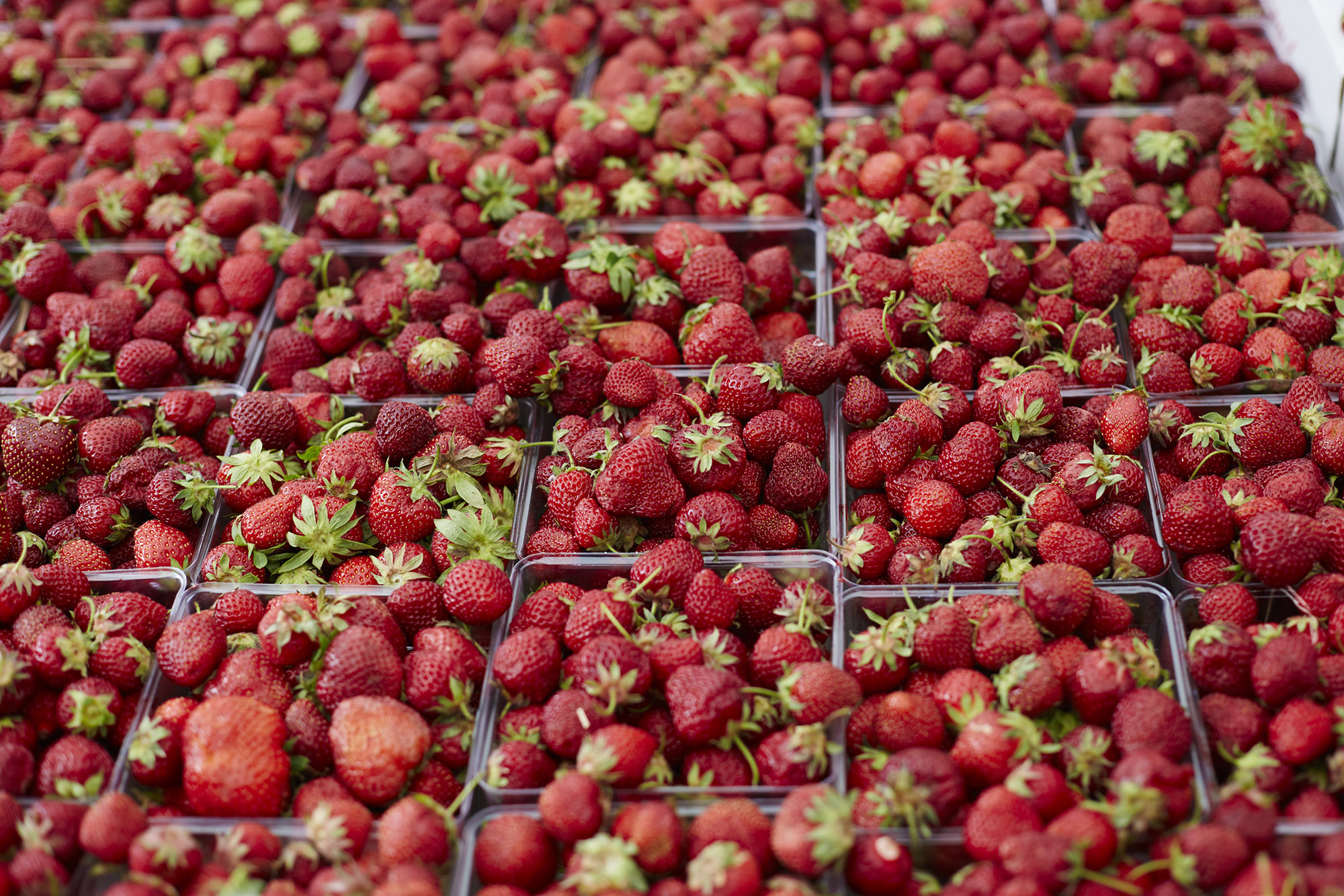 Strawberries in abundance.