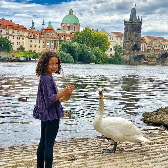 Beautiful day communing with nature. #vltava #vltavariver #pragueworld #czechrepublic #passportready #summerwithgrandma2019 #optoutside #swans #charlesbridge #instagram #karluvmost