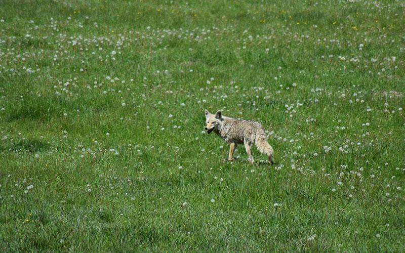 Jackson Hole Wildlife Tour