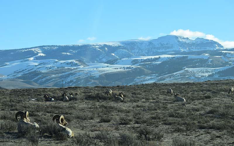 Grand Teton National Park Tours