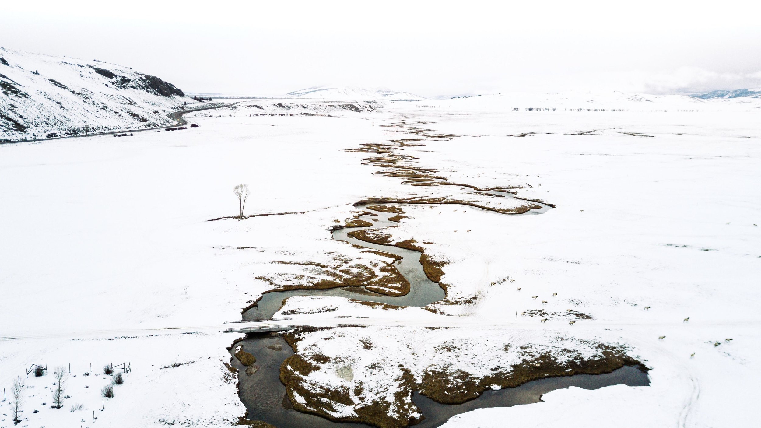national elk refuge drone photo.jpg