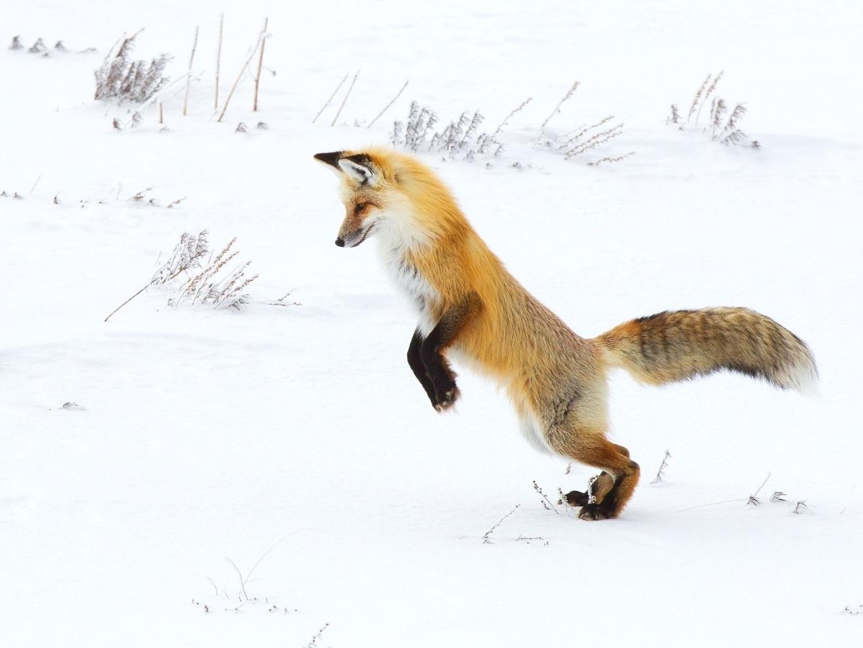 fox-3822455_1920.jpg
