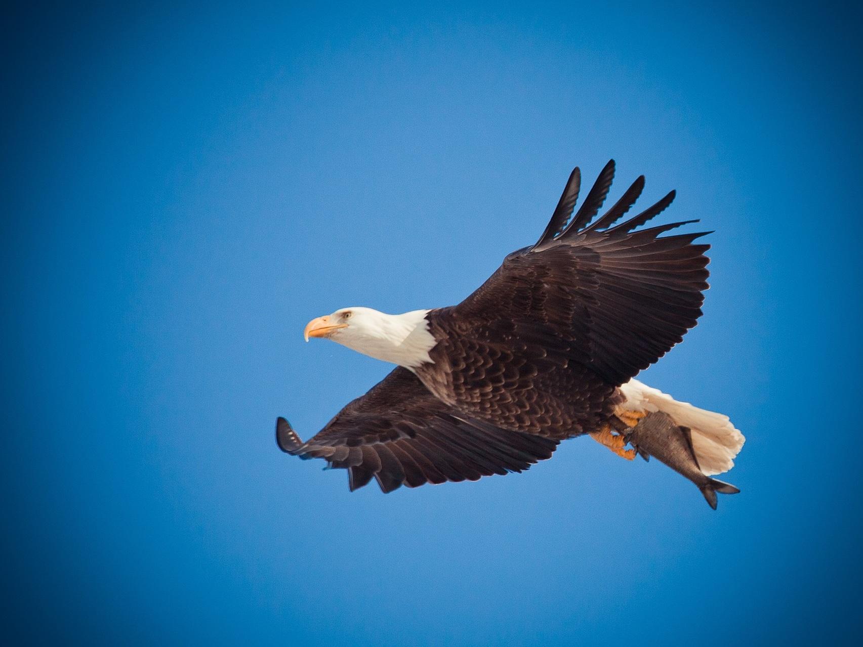 eagle-1029909_1920.jpg