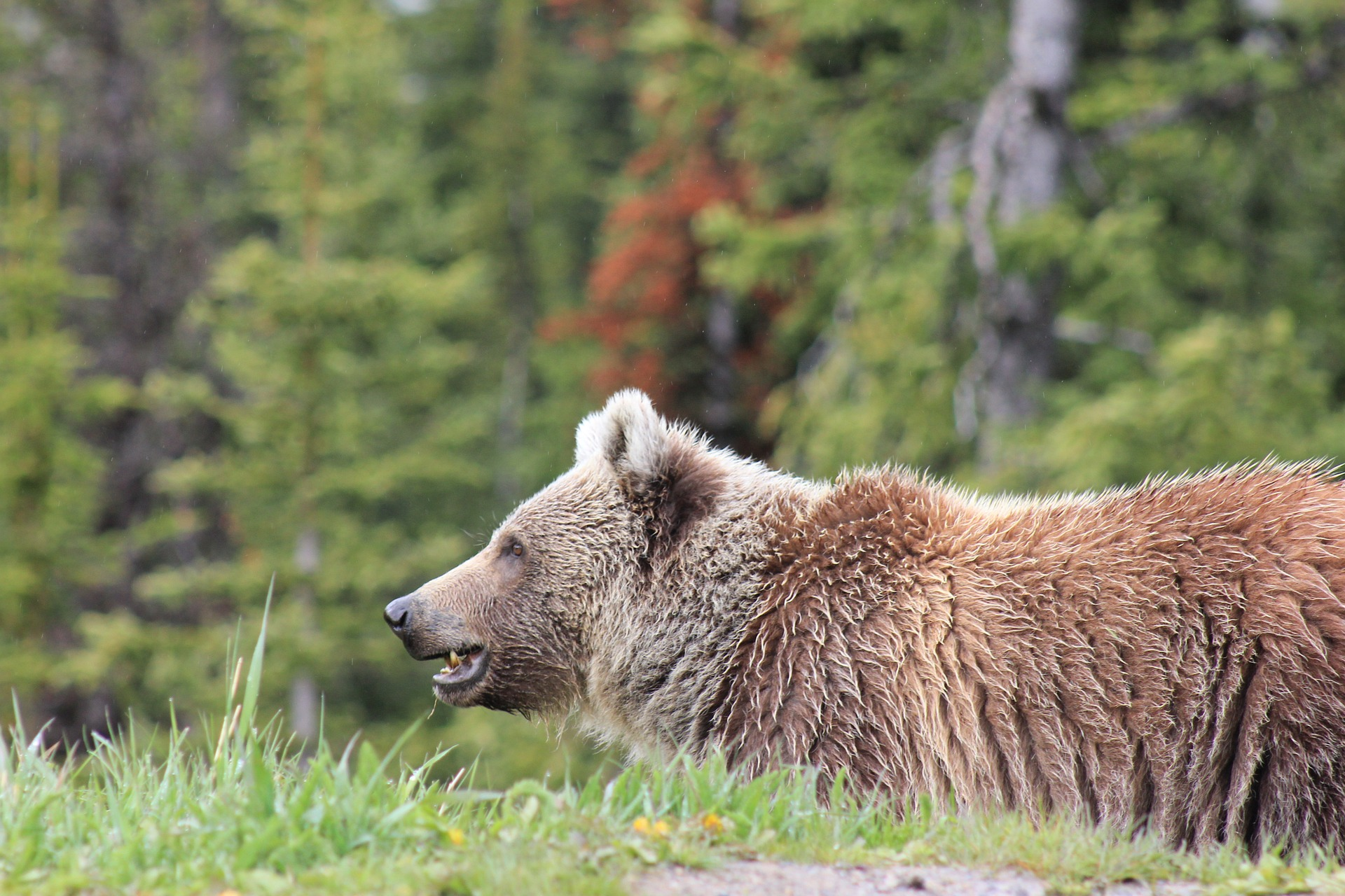 bear-2960919_1920.jpg