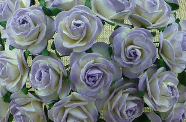 Lilac 2-tone