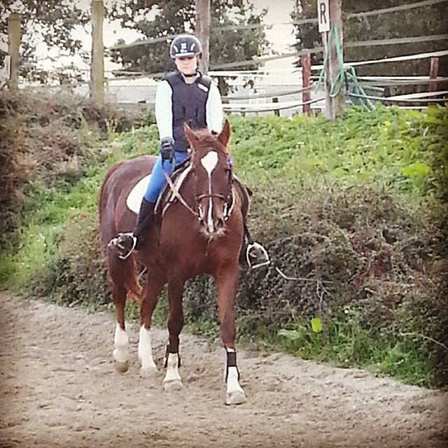 #harasdelukos #horse #dressage #equitation #equestrian #gwendy #cavalier #cheval #elevage #insta