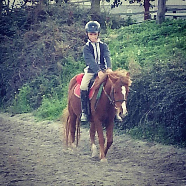 #harasdelukos #horse #dressage #equitation #equestrian #ambre #cavalier #cheval #elevage #insta #poney #moustique