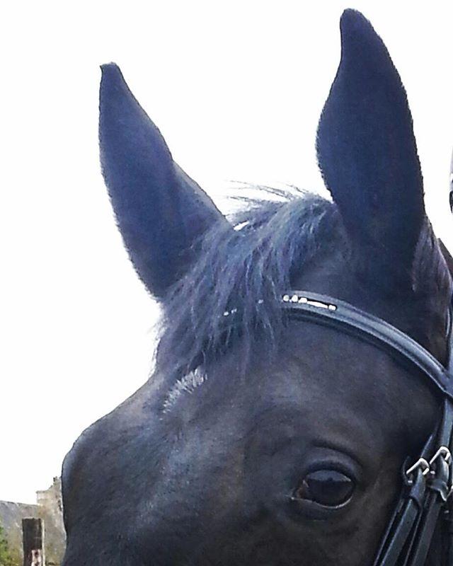 #harasdelukos #horse #dressage #equitation #equestrian #darwindelukosz #cavalier #cheval #elevage #insta