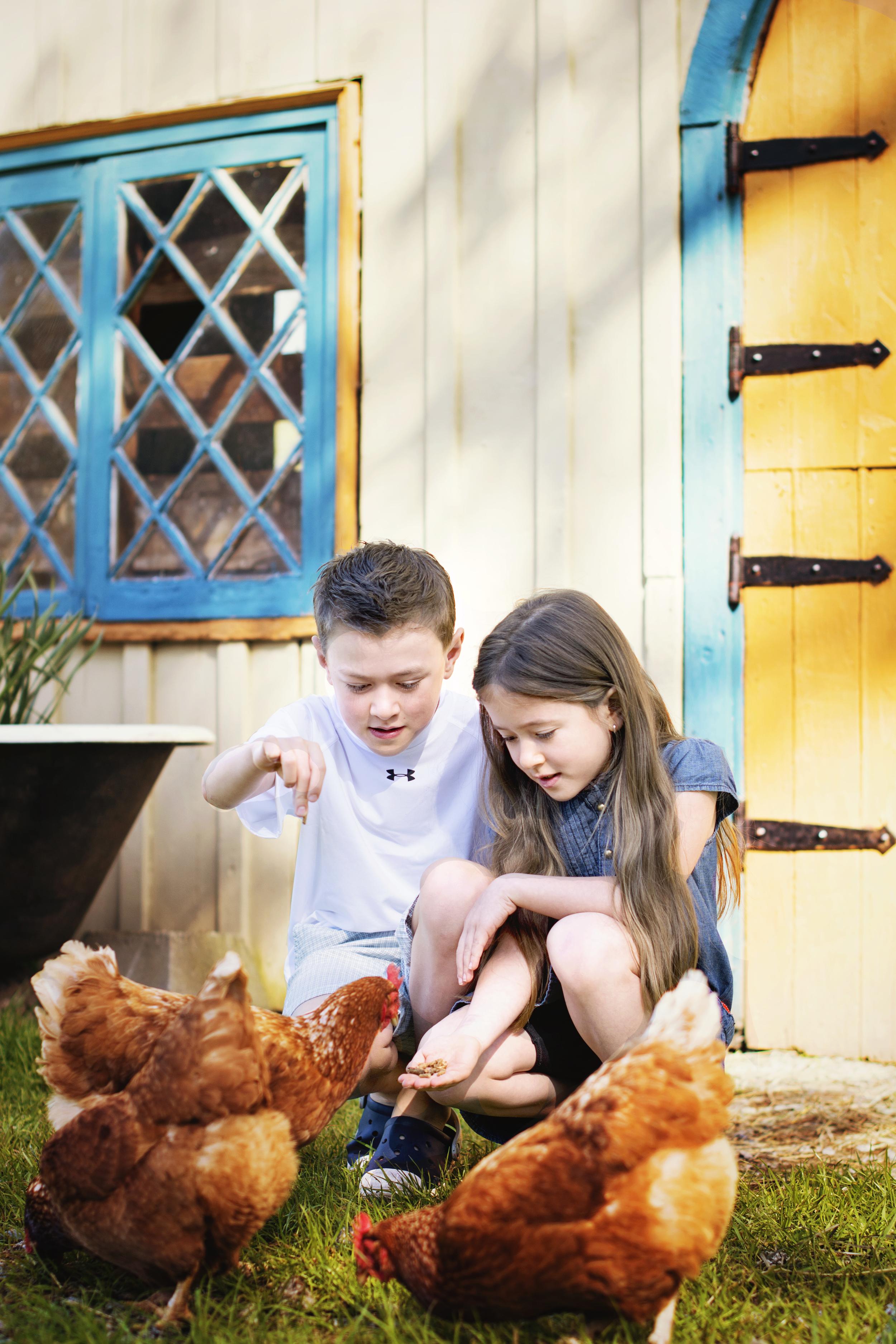Feeding some chickens