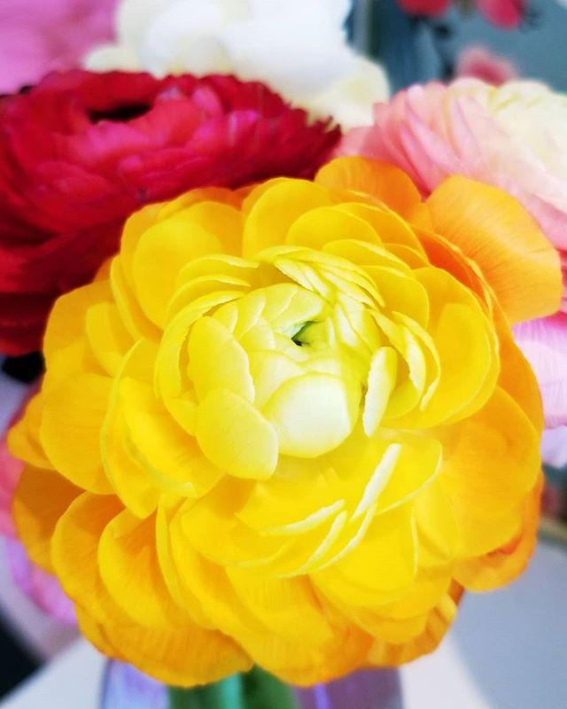 Flowers so good looking ya gotta see how they taste     Swipe!