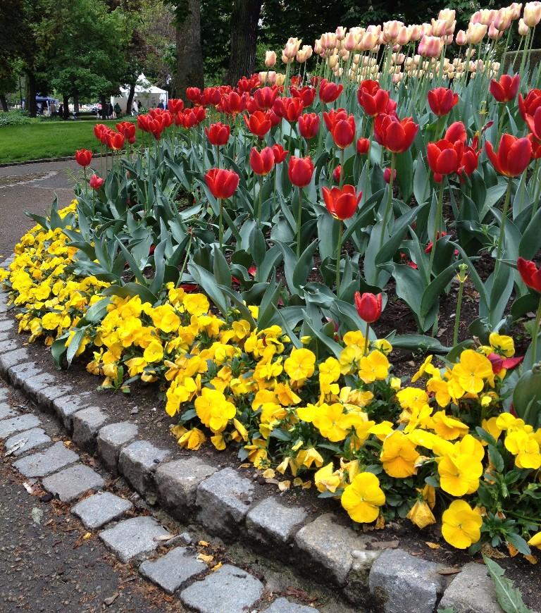 May flowers in Pilsen, Czech Republic