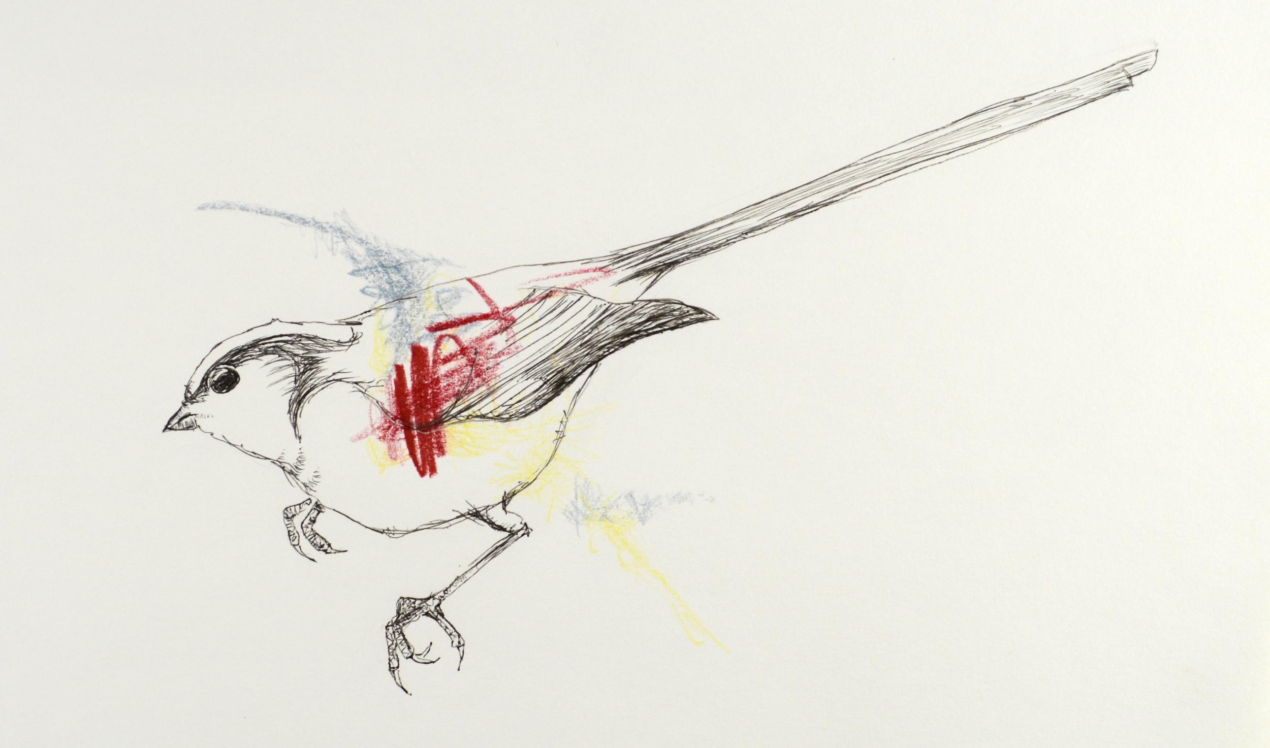 "Bird. 7"" x 10"" Ink, Colored Pencil."