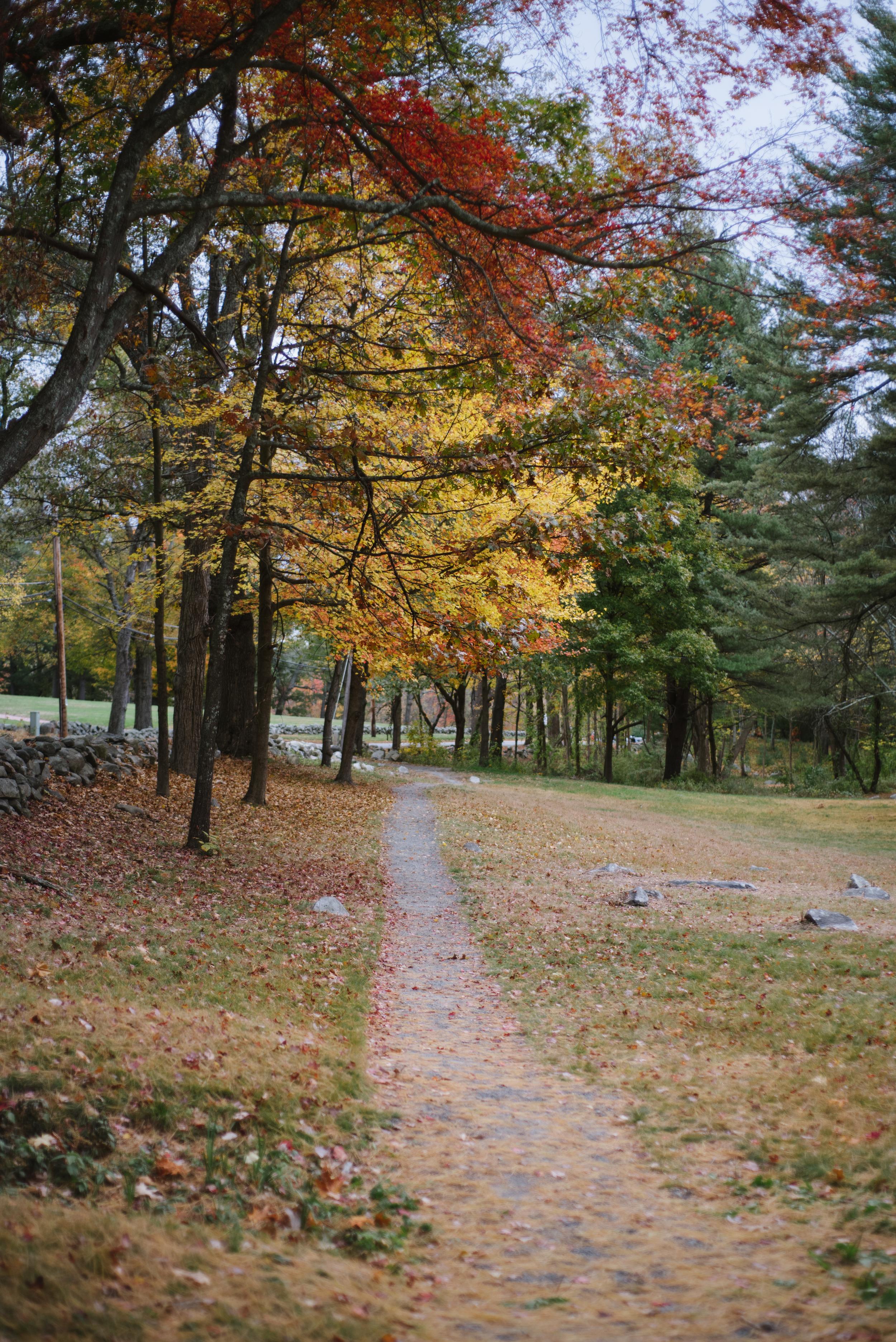Autumn-2015-30.jpg
