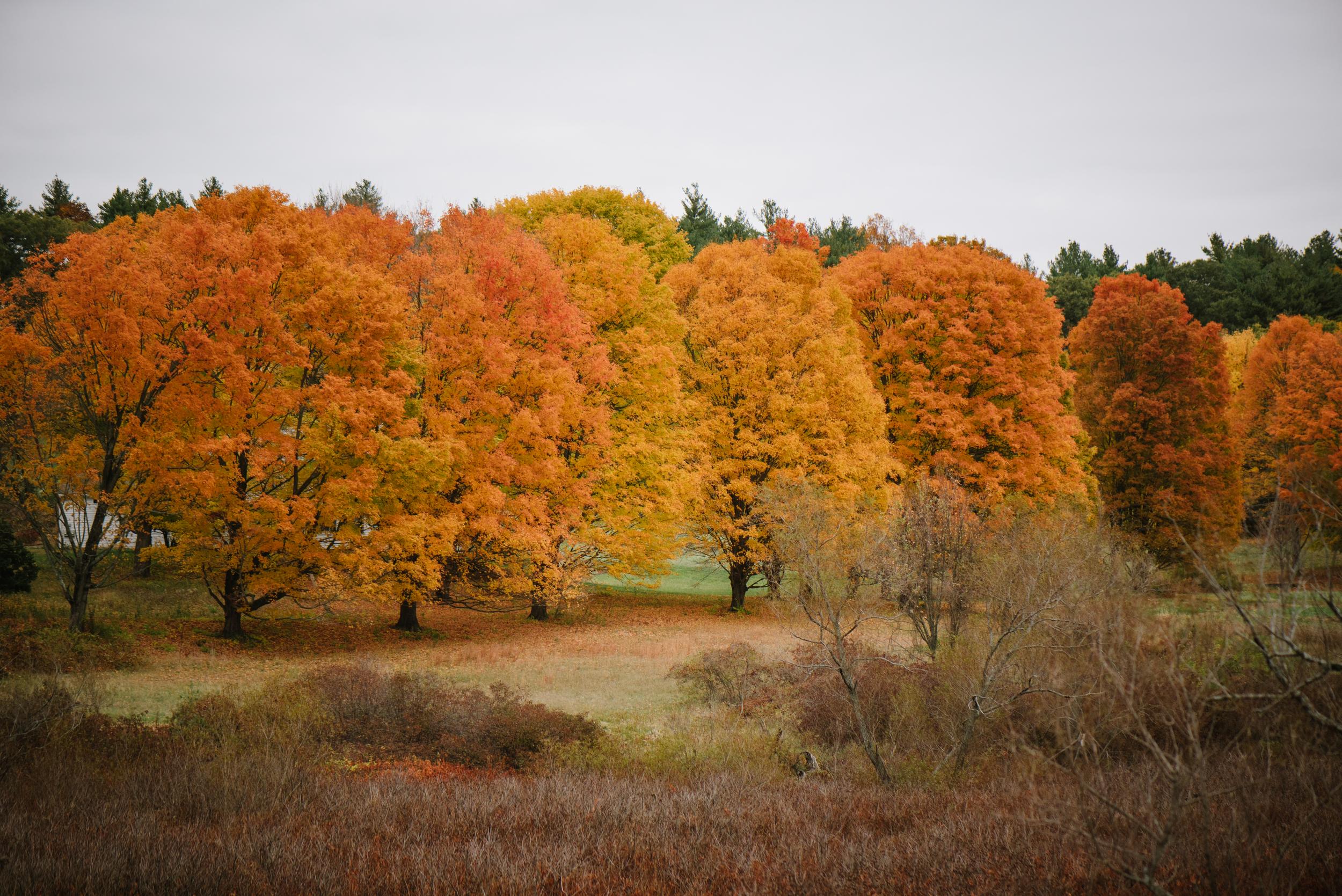 Autumn-2015-34.jpg