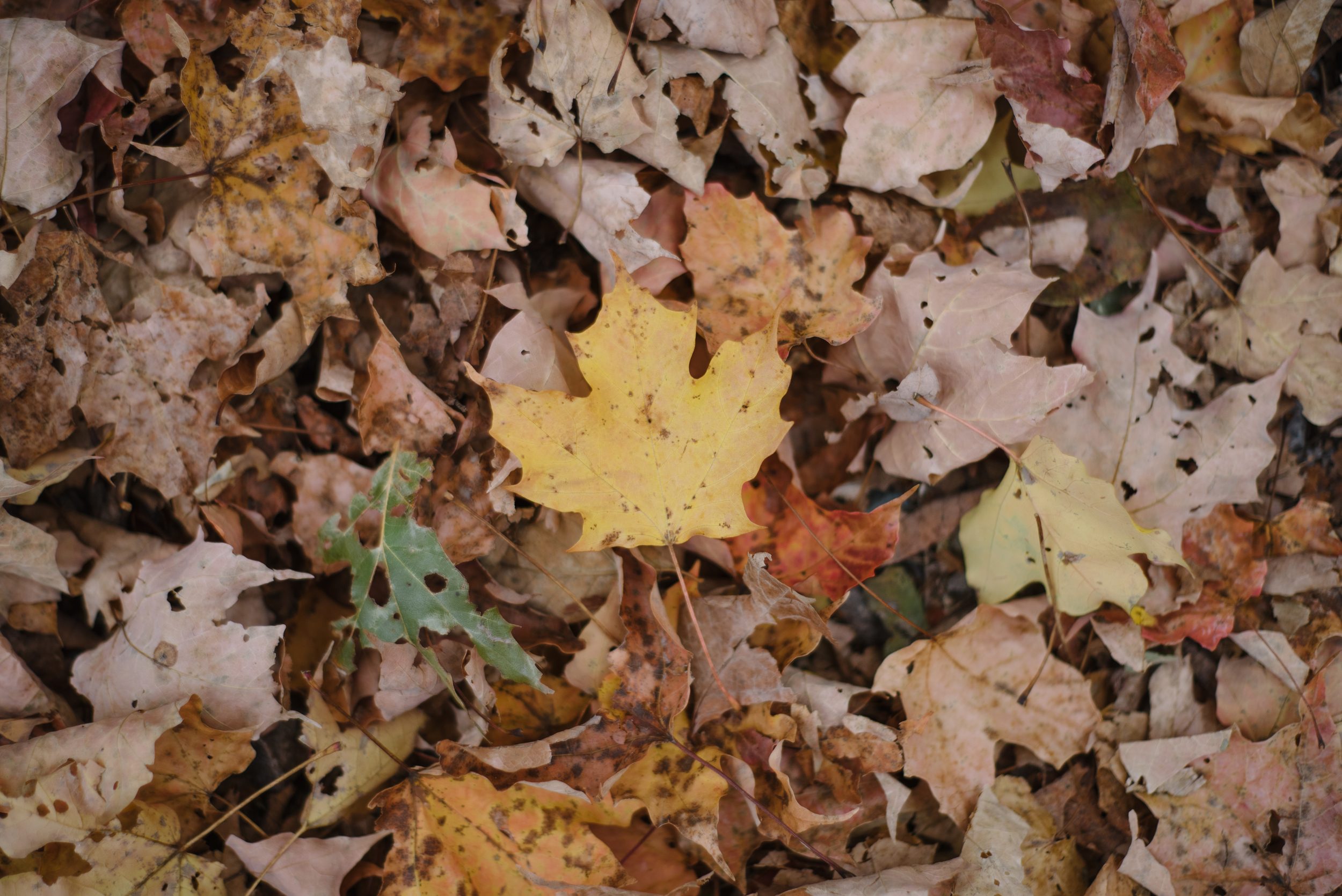 Autumn-2015-42.jpg