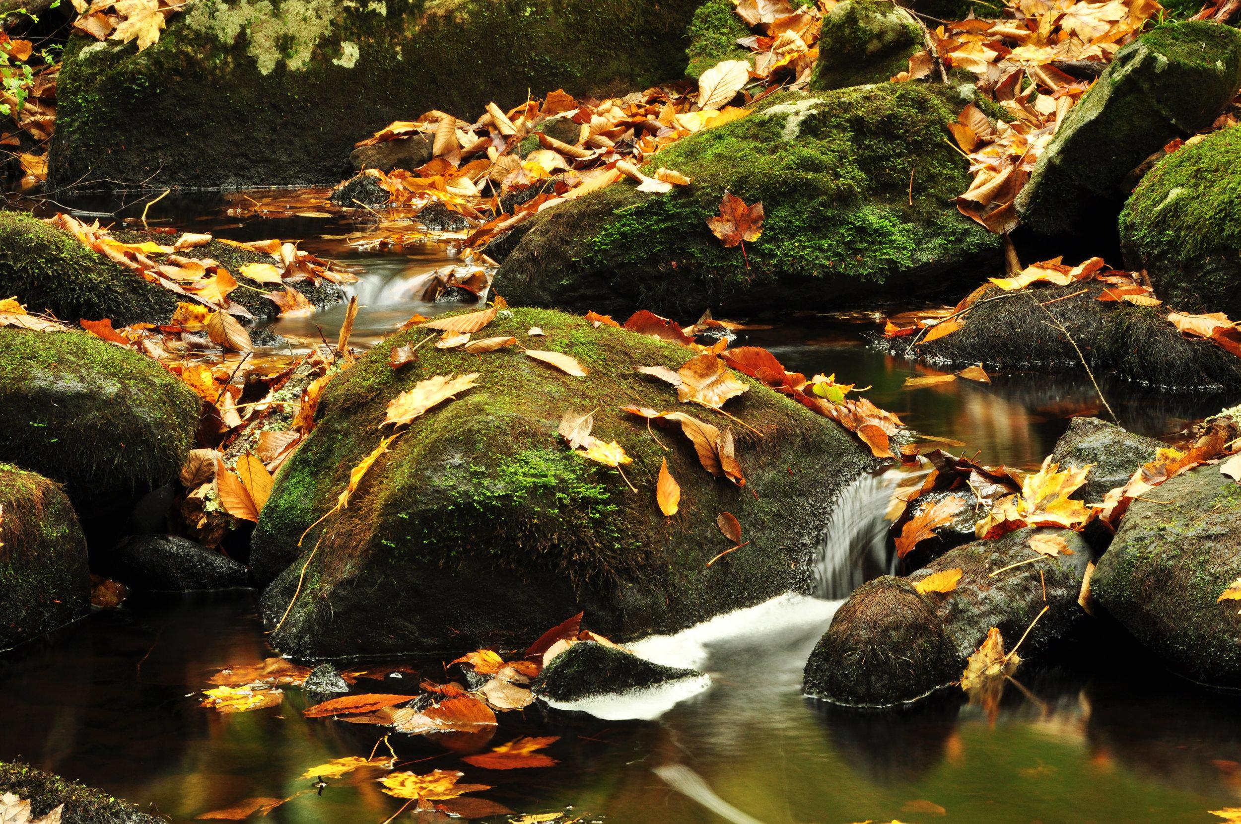 Fall_2012.jpg