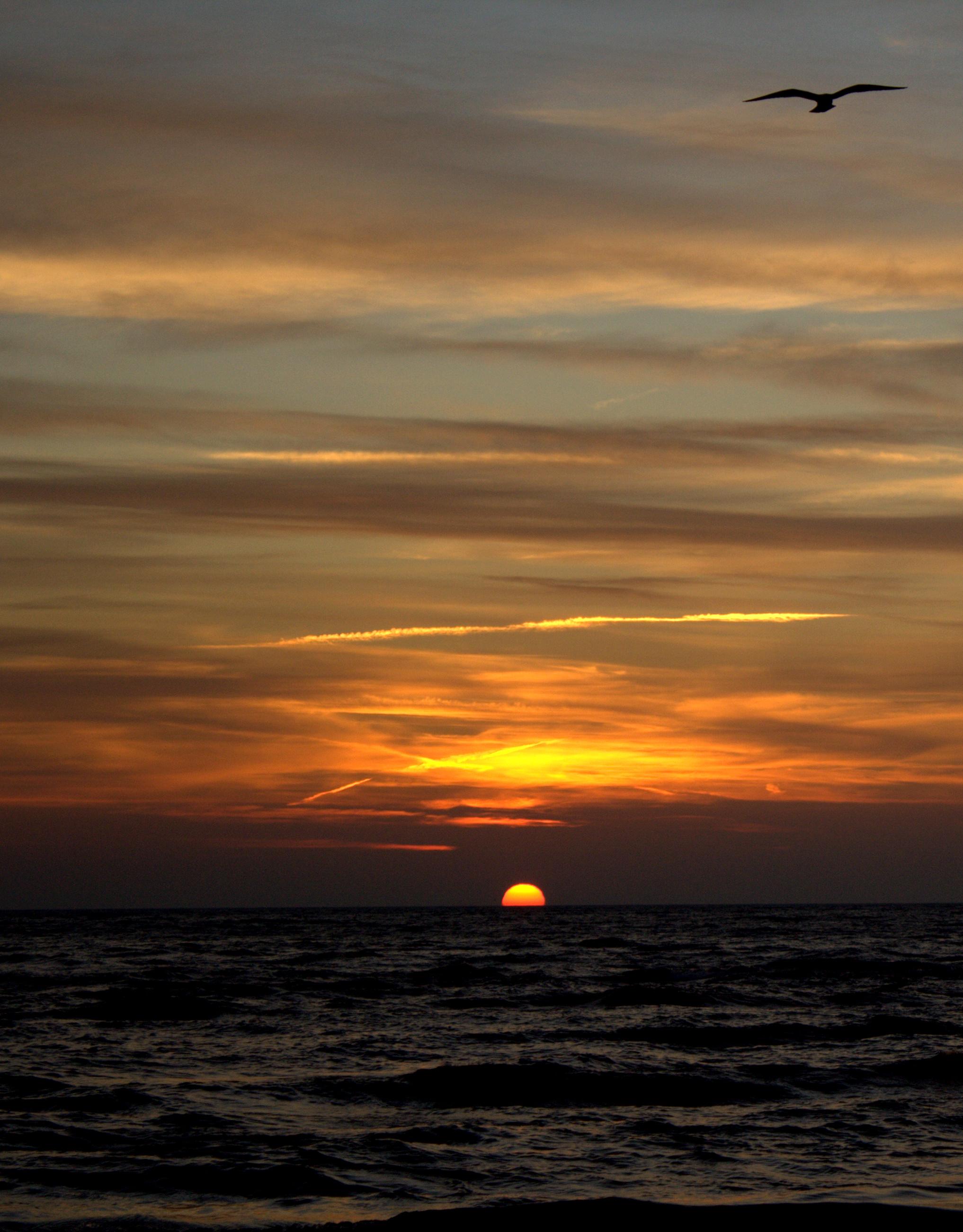 sunrise bird.jpg