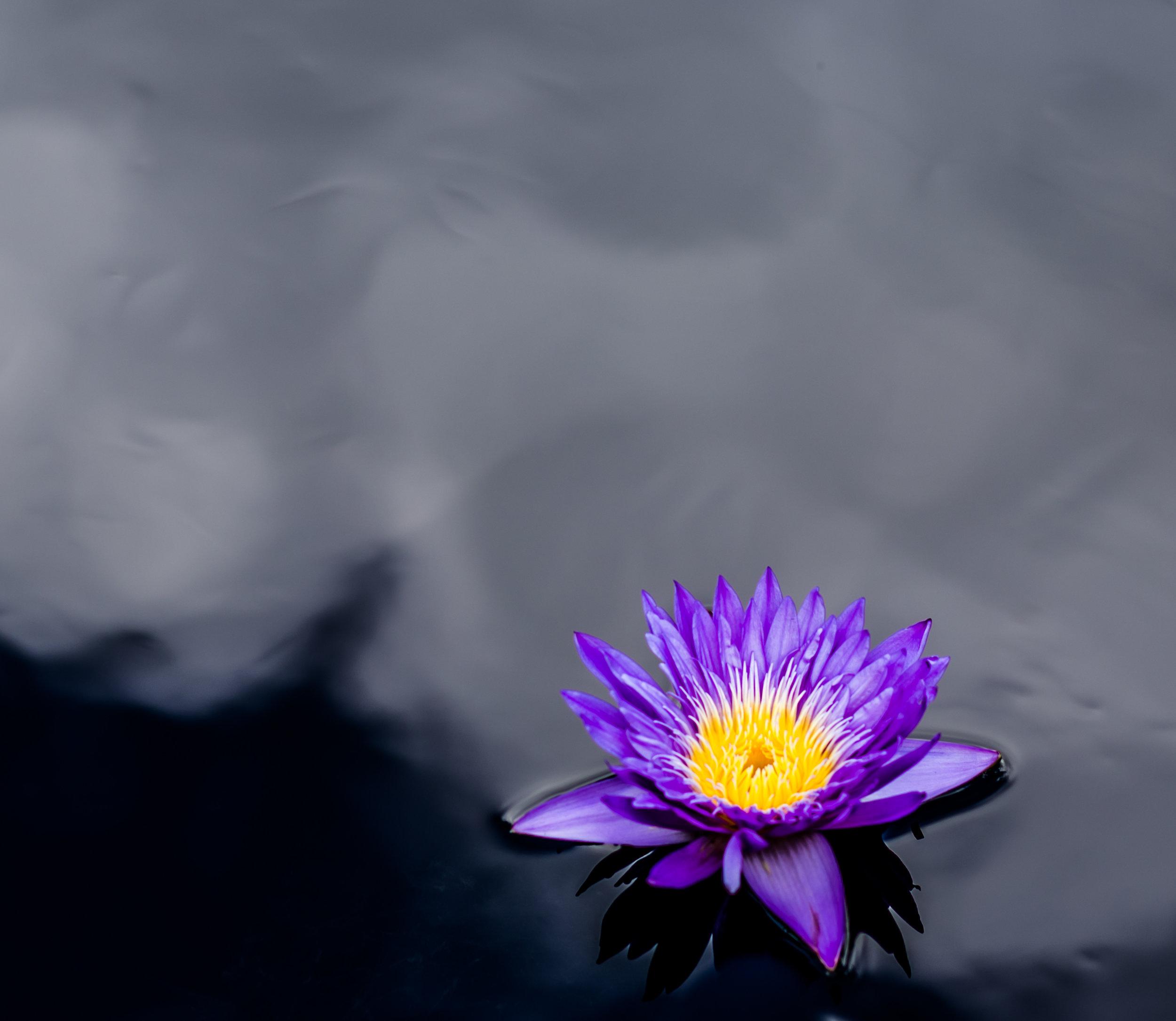 001_botanic.jpg