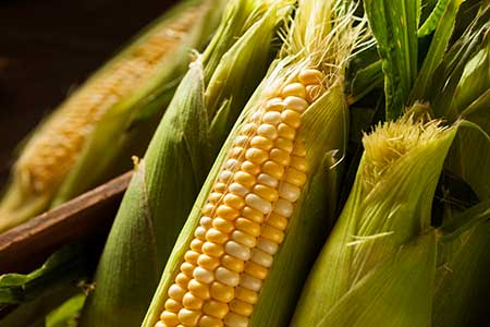 corn-on-the-cob-web.jpg
