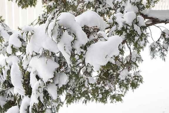 2018_03_24_1033_Snow_on_branches-WEB.jpg