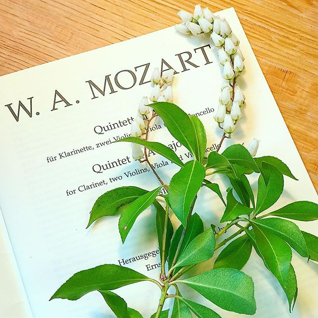 """If only the whole world could feel the power of harmony."" W.A. Mozart 🌾 * * * * * * * #mozart #wamozart #wolfgangamadeusmozart #classicalcomposer #classicalmusic #classicalmusician #classicalmusicians #instaclassical #musiclovers #musiclover #musicstudent #musicstudents #musicmajor #chambermusic #jj_musicmember #total_mymusic #musicaclassica #lavidademusico #soundbysight #quintet #quintets #quinteto #klarinette #violin #violinist"